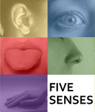 Five Senses (Next Generation Science Standards)