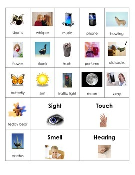 Five Senses Picture Sort