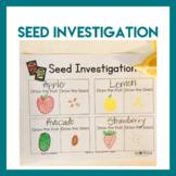 Garden Theme Preschool STEM - Seed Investigation