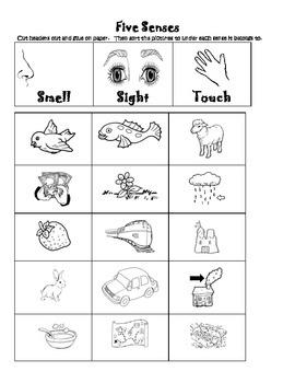Five Senses Sort