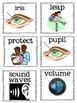 Five Senses Vocabulary Cards