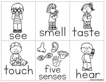 Five Senses Write the Room