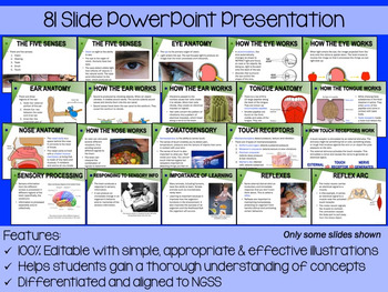 Five Senses PowerPoint, Notes & Exam (Differentiated and Editable)