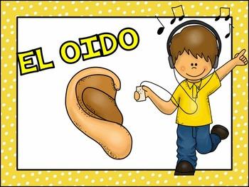 Five Senses in Spanish