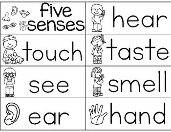 Five Senses {word wall cards}