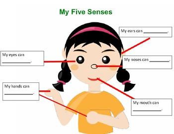 Five senses-