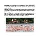 Flamingo - Carribbean American - lesson review article questions vocab