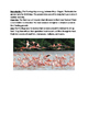 Flamingo - Carribbean American - lesson review article que