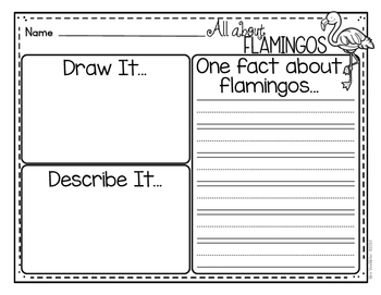 Flamingo Literacy Graphic Organizers