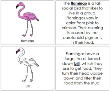 Flamingo Nomenclature Book