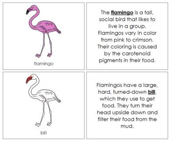 Flamingo Nomenclature Book (Red)