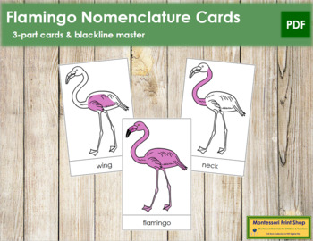 Flamingo Nomenclature Cards