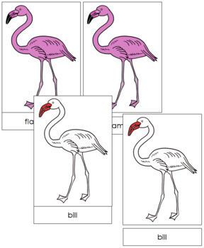 Flamingo Nomenclature Cards (Red)