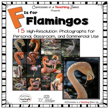 Flamingo Photographs for Classroom and Commercial Use