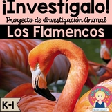 Flamingo Research Project and Activities IN SPANISH for K-1