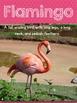 Flamingos:  A Non-Fiction Close Reading Resource