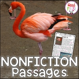 Flamingos Nonfiction Guided Reading Comprehension and Fluency Passages
