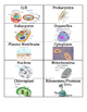 Flash Card/Word Walls for Middle School Life Science