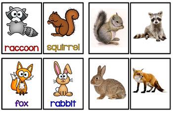Flash Cards - Animals