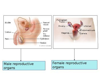 Flash Cards - Contraception types  - Revision Activity Sex education