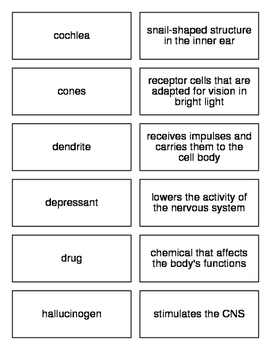 Flash Cards Covering the Nervous System and Other Senses for Biology II