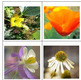 Flash Cards -- Flowers 1