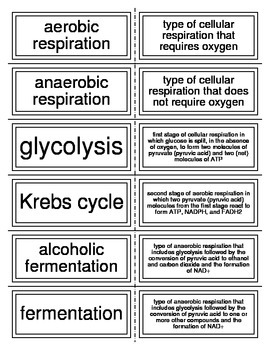 Flash Cards covering Photosynthesis and Cellular Respiration