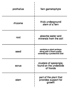Flash Cards covering Plants for Biology II