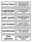 Flash Cards covering The Cell Cycle, Mitosis, and Meiosis