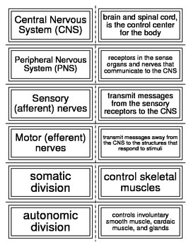 Flash Cards covering the Nervous System