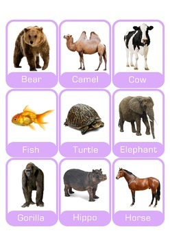 Flashcards  ANIMALS