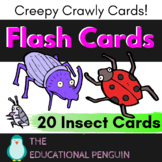 Flash Cards: Insects