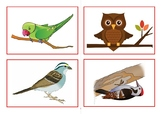 Flashcards birds
