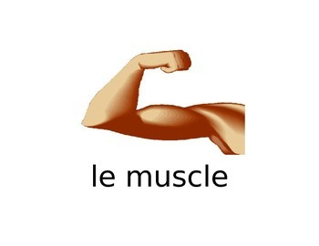 Flashcards for le muscle, l'os, les dents