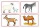 Flashcards home animals