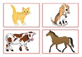 Flashcards home animals