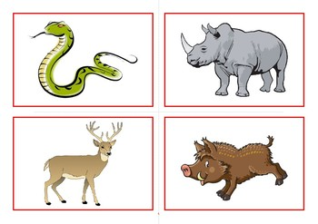 Flashcards the animals of the forest