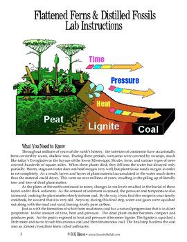 Flattened Ferns & Distilled Fossils (Geology)