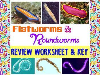 Flatworms and Roundworms Review Worksheet for Biology or Zoology