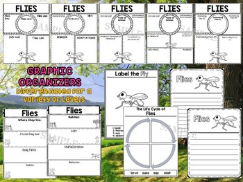 Flies - Writing Craft and Graphic Organizers SET, Book Template, Insects