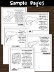 Flipbook / Minibook : The Digestive System : Step 2 - Lear