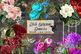 Floral Ephemera Elements