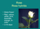 Floriculture ID Flower of the Day Bell Ringer