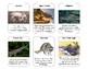 Florida Go Fish Card Game