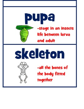 Florida Pearson Interactive Science Vocabulary Cards with Definition and Graphic