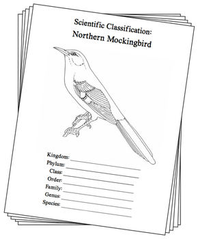 Florida State Bird Notebooking Set Northern Mockingbird