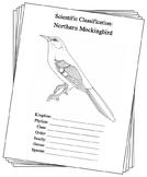 Florida State Bird Notebooking Set (Northern Mockingbird)