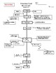Flow chart of the Alimentary canal wkst