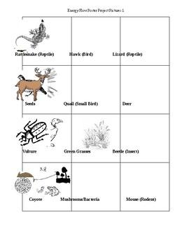 Flow of Energy: Food Chains/Food Webs