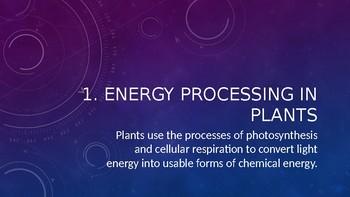 Flow of Energy PowerPoint